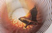 空気の器 ノートルダムの鐘